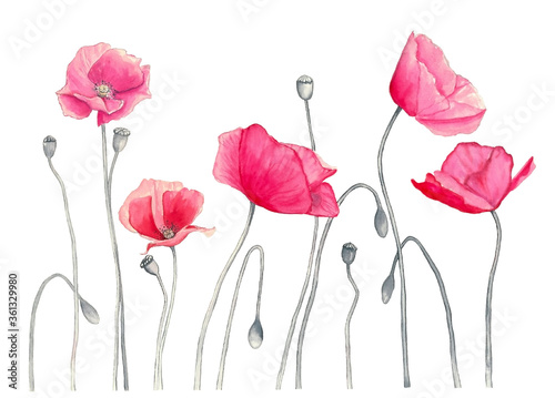 pink poppies Poster Mural XXL