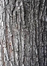 Surface Texture Of Linden Tree Bark, Macro