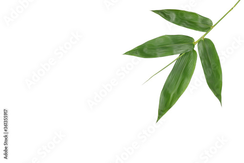 Bamboo leaves isolated on white background clipping paths with free copy space Canvas Print