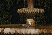 La Fontana Dei Cavalli A Villa...