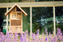 Bee And Insect Hotel In A City Enviroment, Glass Building In The Background And Lavender Flowers In Front.