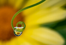 Flower With Dew Drops - Macro Photography