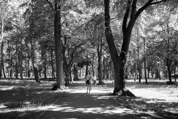 ludzie w alei parkowej wśród drzew czarno białe