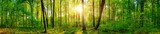 Fototapeta Las - Panorama of a beautiful green forest with bright sun shining through large trees