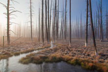 Frosty Morning In Yellowstone