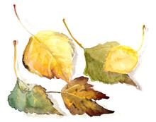 Watercolor Drawing Botanical S...