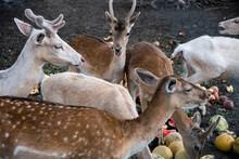 A Beautiful Fawn Deer Group He...