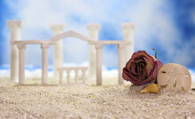 Tropical Beach With Rose And Sea Shells