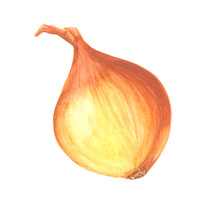 Watercolor Onion Isolated On W...