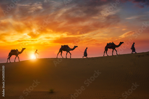 Indian cameleers (camel driver) bedouin with camel silhouettes in sand dunes of Thar desert on sunset Slika na platnu