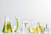 Plants In Laboratory Glassware...