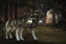 3D Rendered Fantasy Forest Landscape At Night With Two Gray Wolves - 3D Illustration