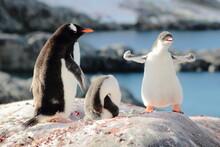 Strongest Gentoo Penguin Cute ...