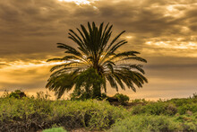Palm Tree At Sunset, Warm Colo...