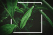 Leinwandbild Motiv Close up rain drops on tropical nature green leaf with white frame abstract background.
