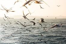 Flock Of Seabirds Flying Over ...