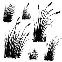 Set Of Hand-drawn Beach Grass....