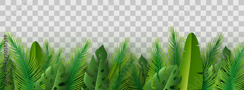Summer palm leaves on transparent background. Canvas Print