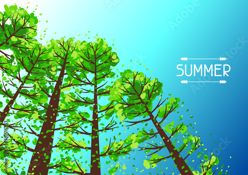 Fototapeta Summer forest background with stylized trees. obraz