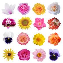 Macro Photo Of Flowers Set: Ro...