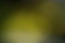 Image Of A Iridescent Green Ba...