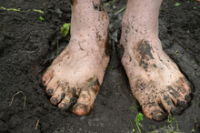Watering The Garden. Dirty Male Feet Closeup. A Man Stands Barefoot On A Path In The Garden.
