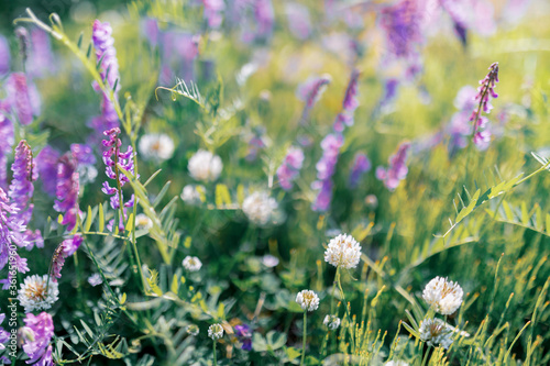 Multicoloured wildflowers blooming in the meadow - 361651960