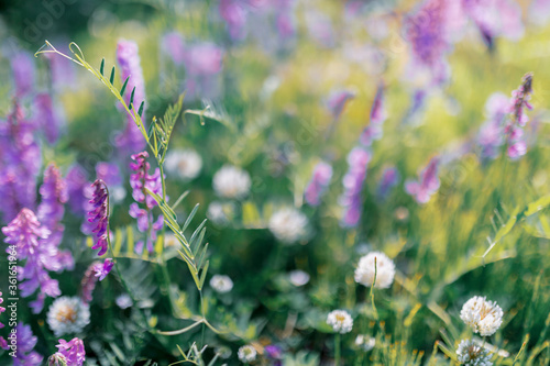 Multicoloured wildflowers blooming in the meadow - 361651964
