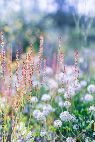 Multicoloured wildflowers blooming in the meadow - 361651989