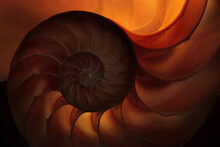 Nautilus Shell Lit From Behind With A Warm Light Accenting The Spiral