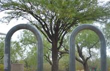 Tree Growing Between The Bike Rack