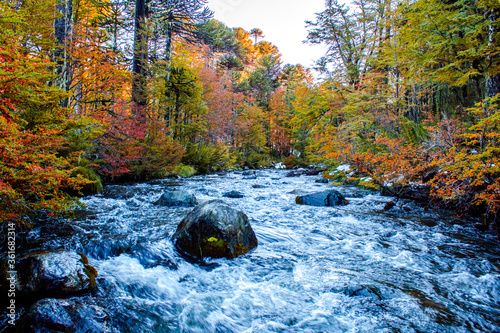 river passing over forest in autumn - 361682314