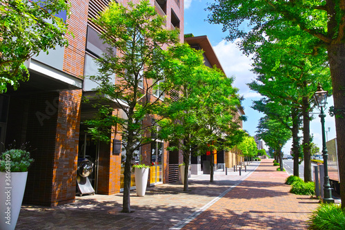 Obraz na plátně 新緑の横浜。みなとみらい地区の太陽の光を浴びて輝く街路樹のあるオフィス街