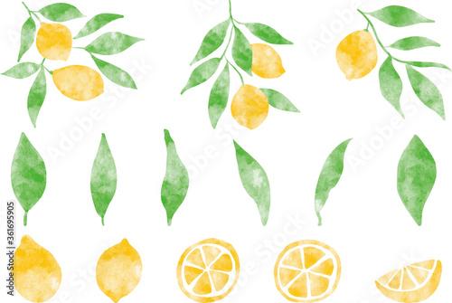 Photographie レモンと葉っぱ_単体_水彩