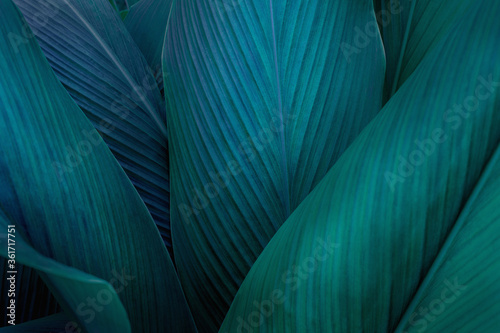 Obraz closeup nature view of green leaf on background, fresh wallpaper banner concept - fototapety do salonu