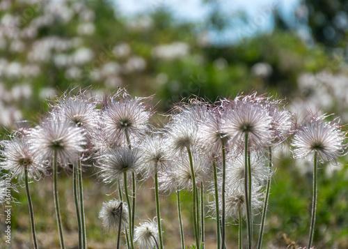 summer day with flowering coast of the island of Saaremaa, Harilaid nature reser Fotobehang