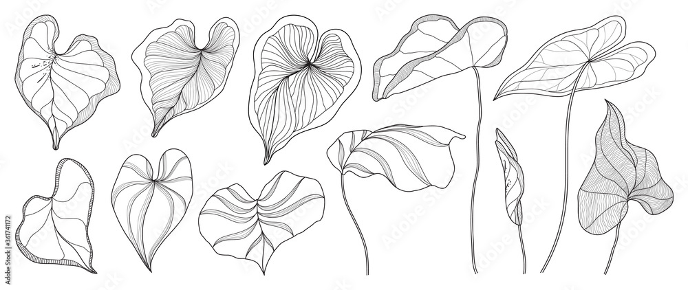 Fototapeta Exotic tropical leaf hand drawn vector. Araceae leaves black and white engraved ink art. Design for fabric, textile print, wrapping paper, fashion, interior design and cover.