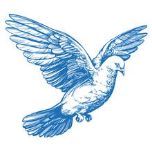 Dove Bird Is A Symbol Of Peace...