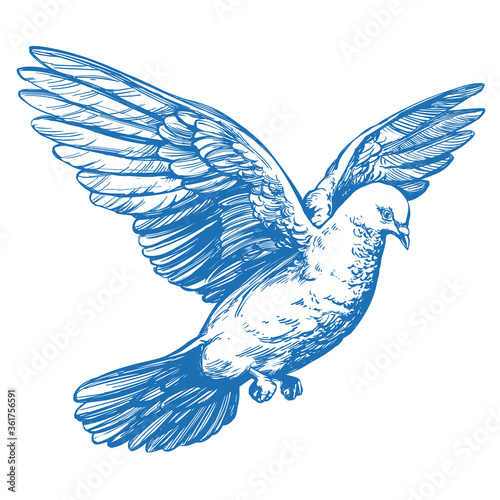 Fotografía dove bird is a symbol of peace and purity hand drawn vector illustration realist