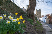 A View Of Daffodils In The Foreground And Richmond Castle, North Yorkshire In The Background