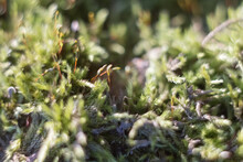 Green Moss On A Tree In The Forest. The Photo Has A Shallow Depth Of Field. Macro Closeup On Lush Lichens On Natural Surface. Beautiful Moss.
