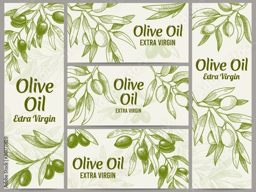 Fototapeta Olive oil banner. Organic oils labels, green olive branches and extra virgin vector label vector illustration set. Engraved plant with leaves for packaging template, sketch branches obraz