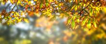 Idylle Unterm Herbstbaum