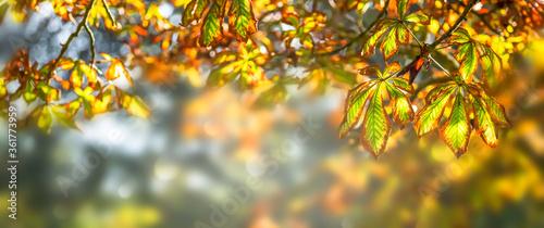 idylle unterm herbstbaum Obraz na płótnie