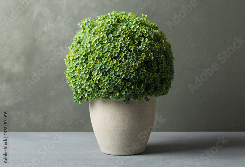 Obraz Artificial plant in ceramic flower pot on grey wooden table - fototapety do salonu