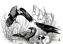 Crow Composition Illustration,...