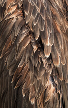 Details Of Feather Of Socotra ...