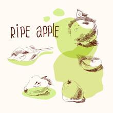 Ripe Apple, Hand Drawing, Vect...