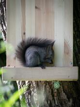 Ein Junges Eichhörnchen