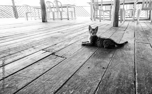 Photo Filhote de gato deitado em chão de madeira com tábuas texturizadas